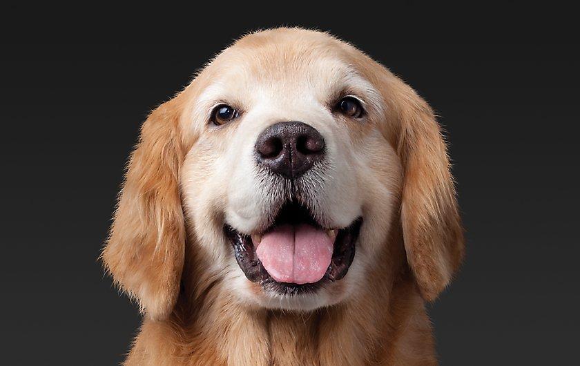 خدمات دامپزشکی سگ در شیراز تهران اصفهان کرمان یزد مشهد بوشهر تبریز