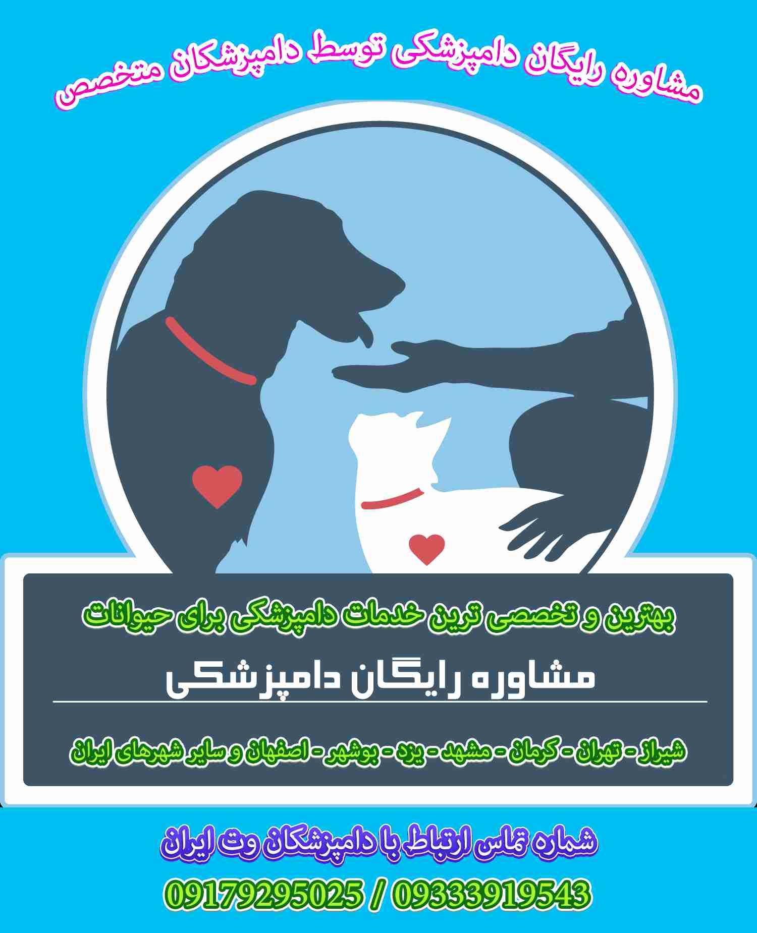 کلینیک دامپزشکی شیراز بیمارستان دامپزشکی سگ و گربه در شیراز