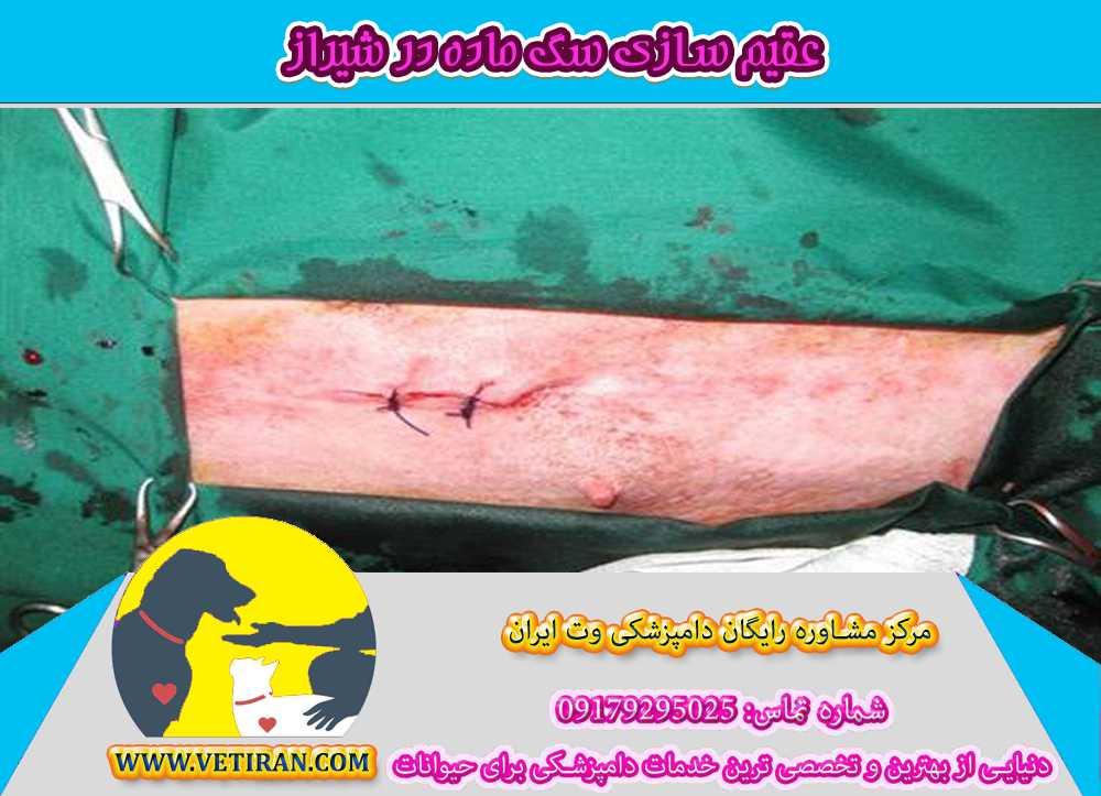 آدرس-کلینیک-دامپزشکی-برای-عقیم-کردن-سگ-ماده-در-شیراز