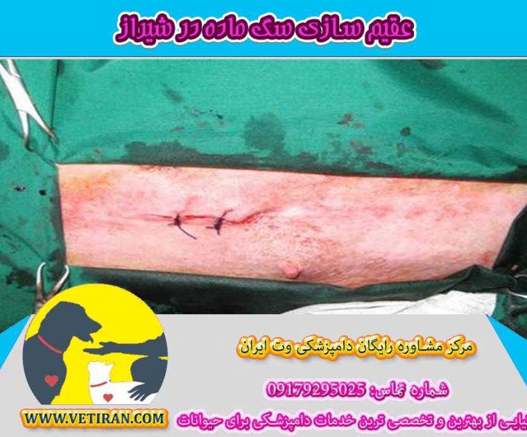 عقیم-کردن-سگ-ماده-در-شیراز