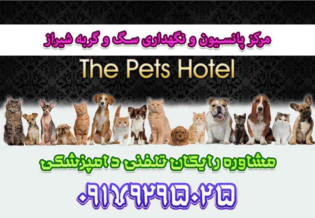 هزینه و قیمت پانسیون سگ در شیراز