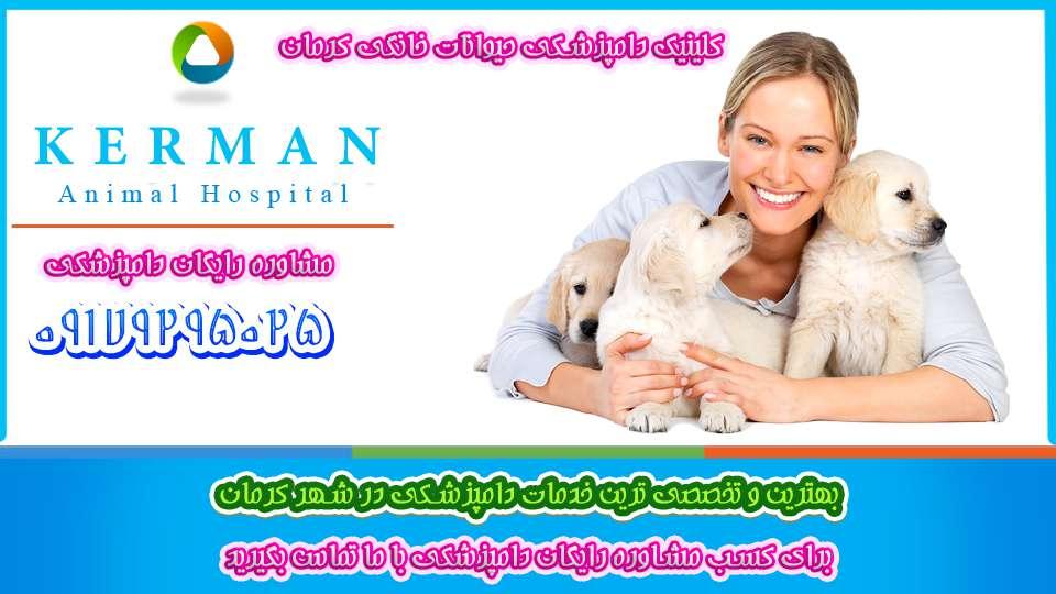کلینیک دامپزشکی کرمان Kerman veterinary clinic