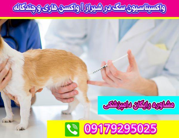 واکسیناسیون برای سگ در شیراز