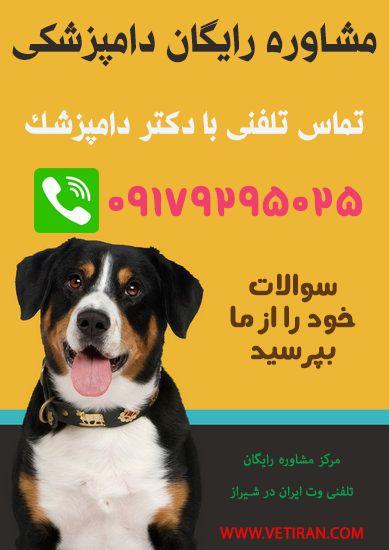 پاسخ دهی به سوالات در ارتباط با سگ و گربه