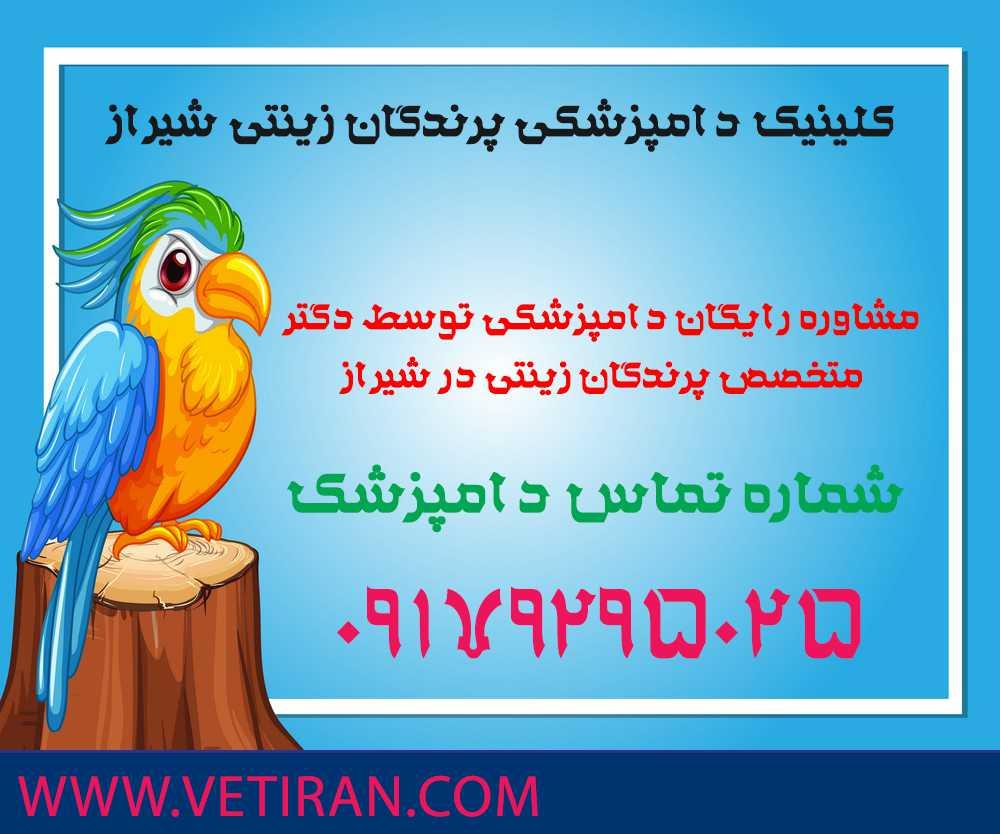 کلینیک دامپزشکی پرندگان زینتی شیراز