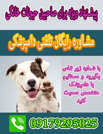 ارتوپدی سگ و گربه در شیراز