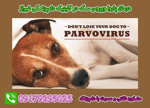 تشخیص و درمان پاروویروس توله سگ در شیراز