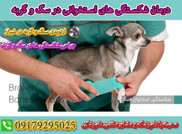 درمان شکستگی دست و پای سگ و گربه در شیراز