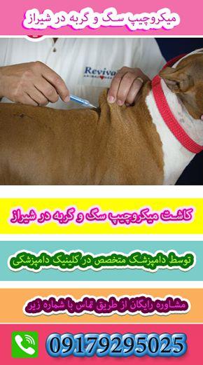 کاشت میکروچیپ سگ و گربه و پرندگان در کلینیک دامپزشکی شیراز