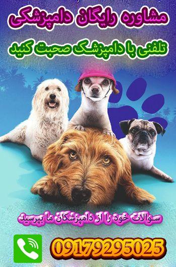 هزینه درمان پاروا ویروس سگ در دامپزشکی شیراز