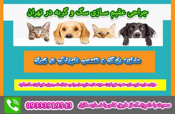 عقیم سازی سگ و گربه در تهران
