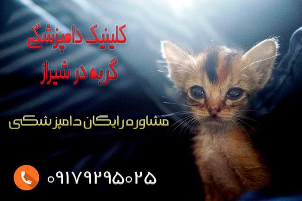 درمان اسهال گربه در شیراز