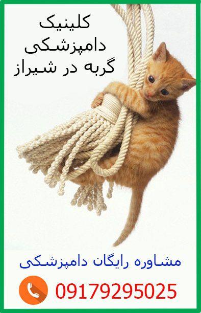دلایل اسهال گربه