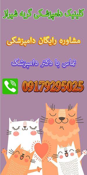 دکتر دامپزشک گربه در شیراز