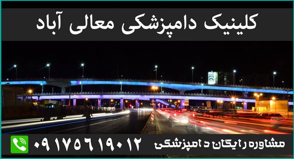 کلینیک دامپزشکی معالی آباد شیراز