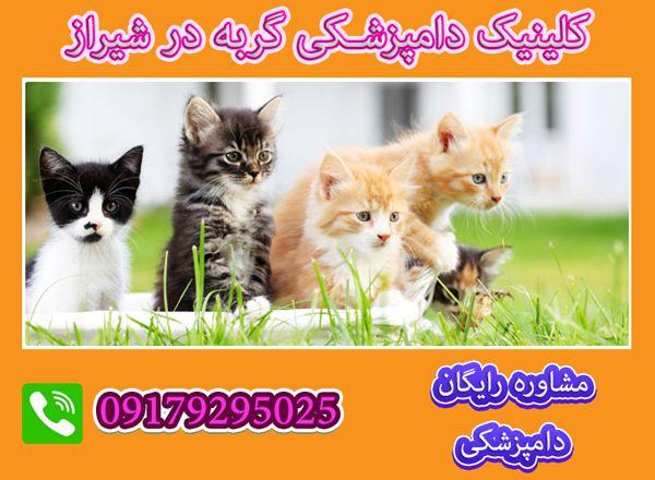 کلینیک دامپزشکی گربه شیراز