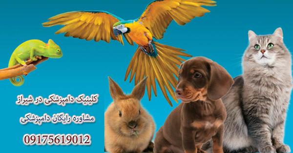 آدرس کلینیک دامپزشکی شیراز | Shiraz Veterinary Clinic Address
