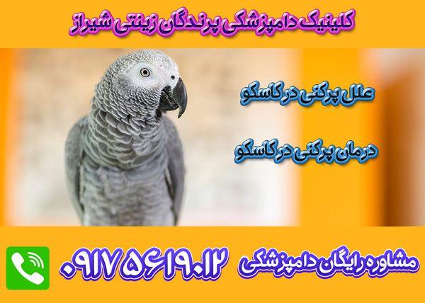 درمان پرکنی کاسکو در شیراز