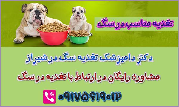 مشاوره-تغذیه-سگ-شیراز