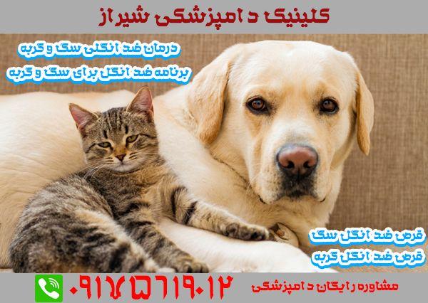 ضد انگل سگ و گربه در دامپزشکی شیراز