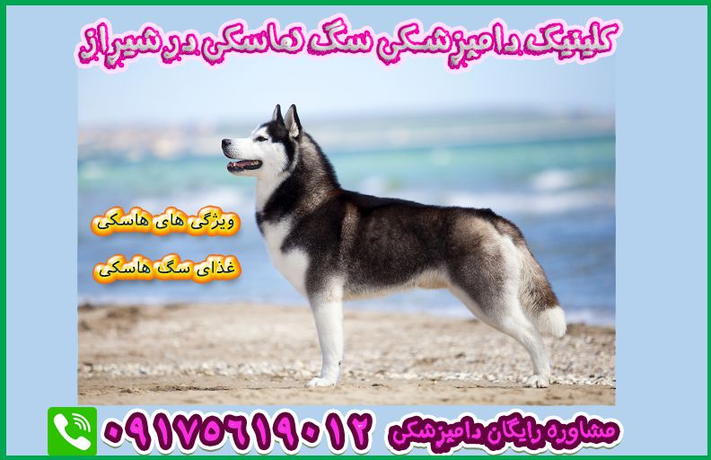 husky veterinary in shiraz clinic